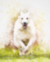 dog-3564569_1920.jpg
