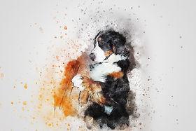 dog-2541880_1920.jpg