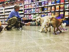 Puppy socials were a lot of fun today!
