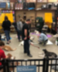Family Dog 3_ handlers and dogs learning