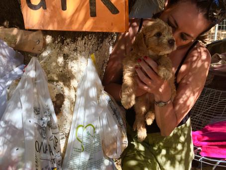 ARK - Animal Rescue Kefalonia