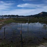 Loch Lomond Wetland Restoration