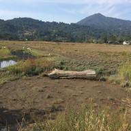 Creekside Marsh Restoration