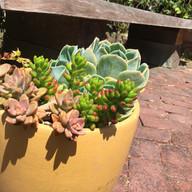 Fairfax Residence Water Conserving Garden