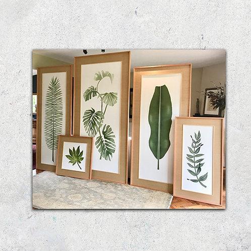 Serie Botánico