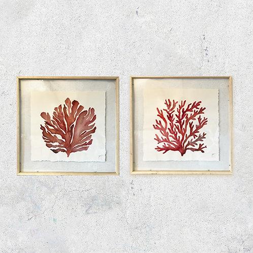 Corales Rojos