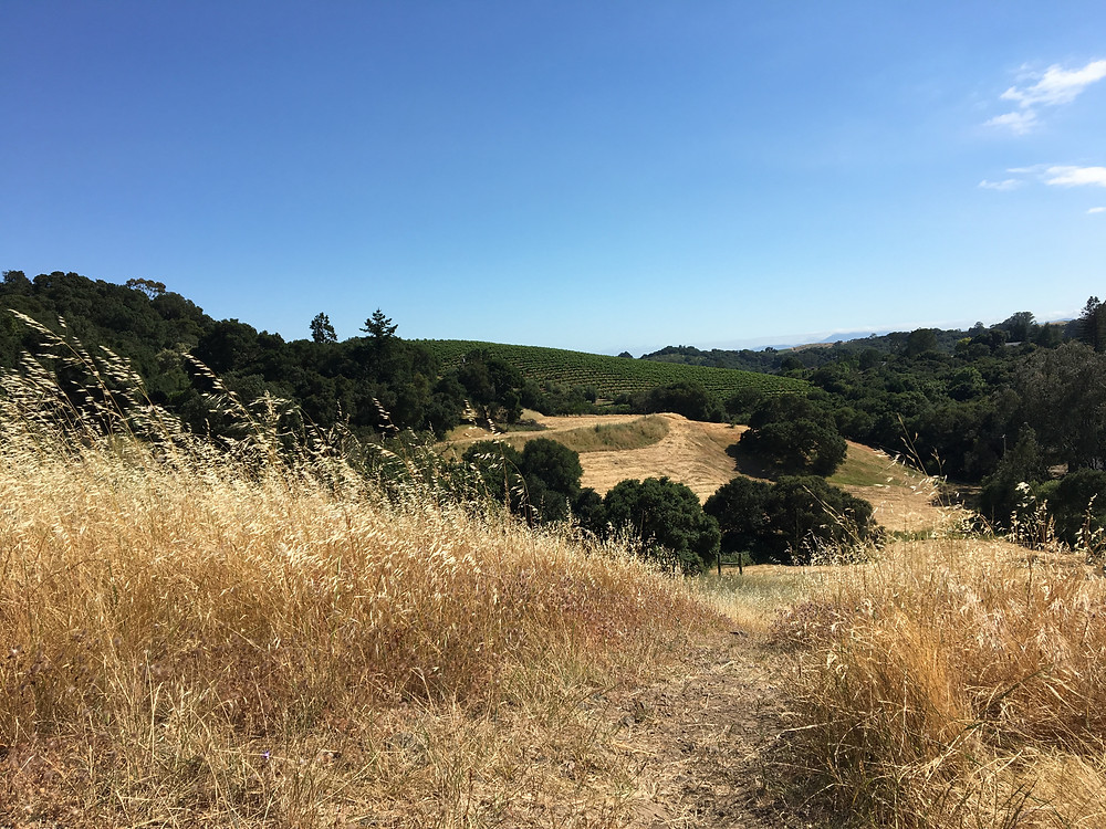 Westwood Hills Park in Napa, California