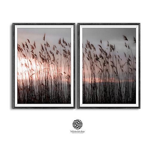 Reed Wall Art Prints, Digital Download,Nature,Sunset Wall Art,