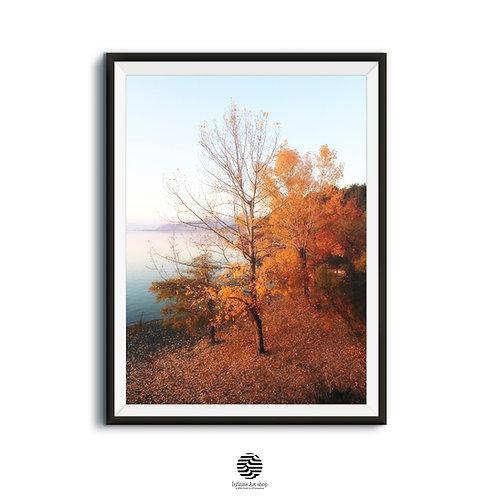 Tree Wall Art Photography,Autumn Coastal Wall Art,Fall Tree Photo,Fall Wall Decor,Digital Download,Large Wall Art,Ohrid Lake