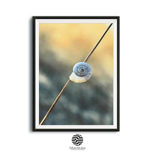 Snail Shell Fine Art Print,Nature Macro Color Photography,Swirl,Biology,Shelter,Animal,Zoology,Wildlife,Shape,Spiral,Still Li