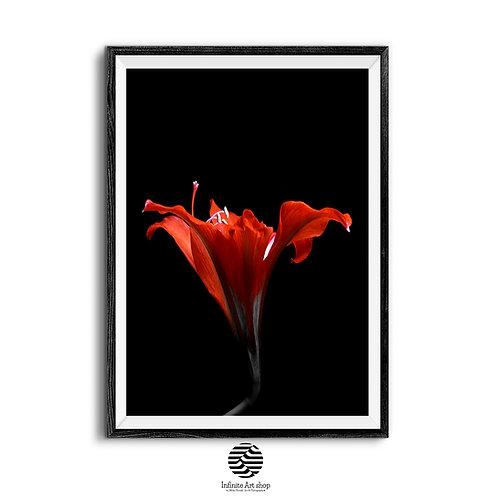 Red Flower Print,Printable Wall Art,Modern Floral Print,Botanical Wall Art.Fine Art,Digital Download,