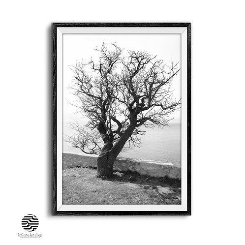 Black And White Tree Print,Tree Branches Wall Art,Nature Fine Art Print,Digital Download,Trendy Wall Art Prints.