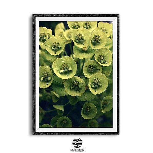 Botanical Wall Art Print,Green Flower Print,Herbs Poster,Plant,Digital Download,