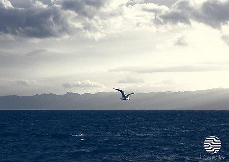 Storm Clouds Wall Art,Sky Print,Flying Bird Photography,Ohrid Lake,Coastal Print,Blue LakeWall Art,Digital Download,
