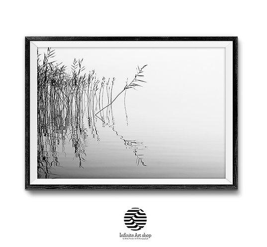 Black and White Minimalist Photography,Reed Wall Art Print,Fine Art Photography,Coastal Wall Art,Lake Print,Digital download,