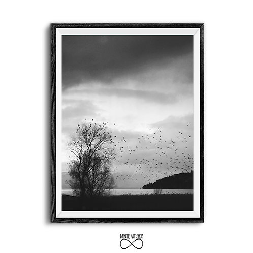 Dark Dramatic Sky,Rainy Clouds Print,Tree Branches,Black and White Birds Photography,Flock of Birds,Instant Download,Trendy