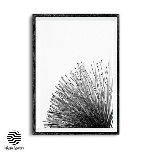 Black and White,Macro Print,Flower Art Print,Botanical Wall Art,Minimalist Photography,Digital Download,Trendy Wall Art Print