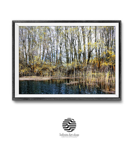 Tree Wall Art Print,Digital Download,Landscape,Nature,Water,Fall Colors,