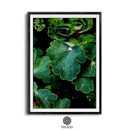 Botanical Wall Art Print,Green Leaf Wall Art,RainDrops Photography,Macro Flower Print,Digital Download,Trendy Wall Art,