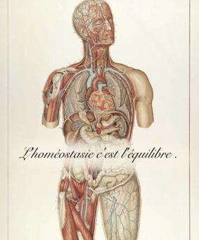 Homéostasie et repos après une séance d'ostéopathie