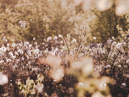 BioFootWear® obtient un nouveau label écologique