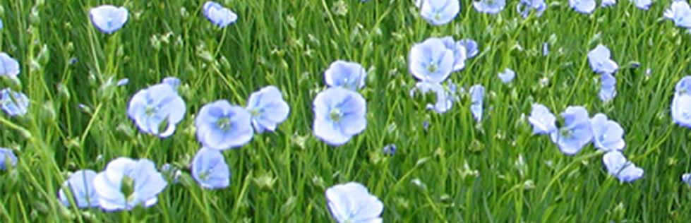 organic farming linen