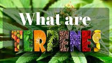 "TERPENES & THE ""ENTOURAGE EFFECT"""