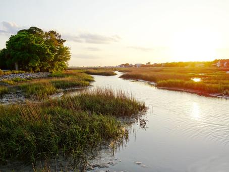 Environmental Stewardship and Sustainability