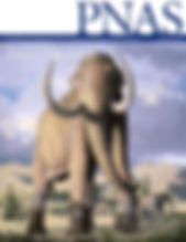 Cover1option_Megafauna_mockup.jpg