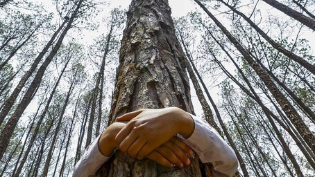 Abrazar un árbol, cargarse de energía, ser canal y parte de un todo