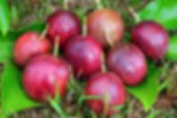 パッションフルーツ果実