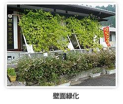 パッションフルーツ壁面緑化