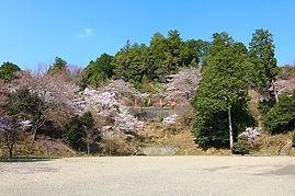 高澤観音の春(第二駐車場)
