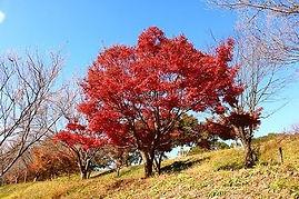 高澤観音の秋(紅葉)