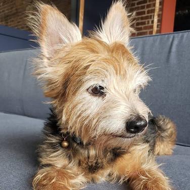 Adopted: Heathcliffe