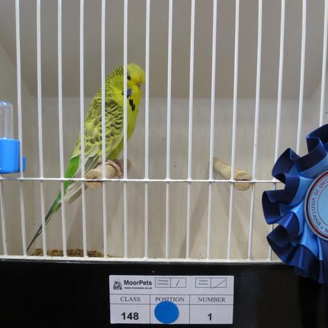 Clearbody young bird - Terheege partnership