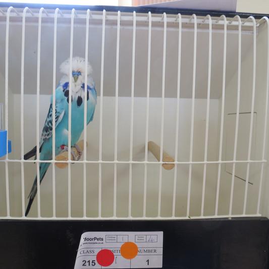 opaline blue cc.JPG