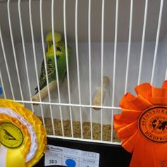 Dark green young bird - D Hart