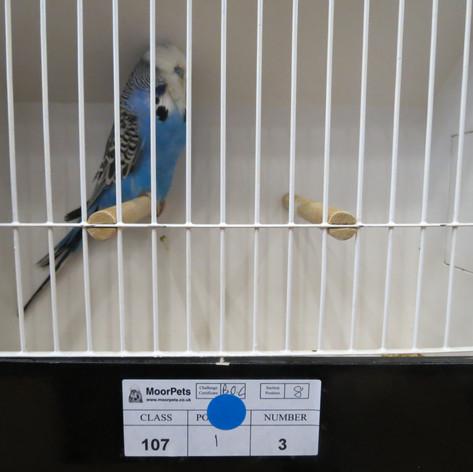Dark blue young bird - Terheege partnership