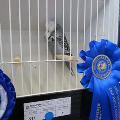 Grey young bird - S Platts
