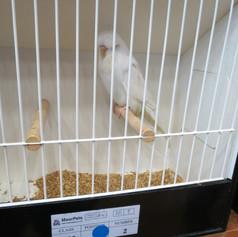 Albino young bird - A Edden