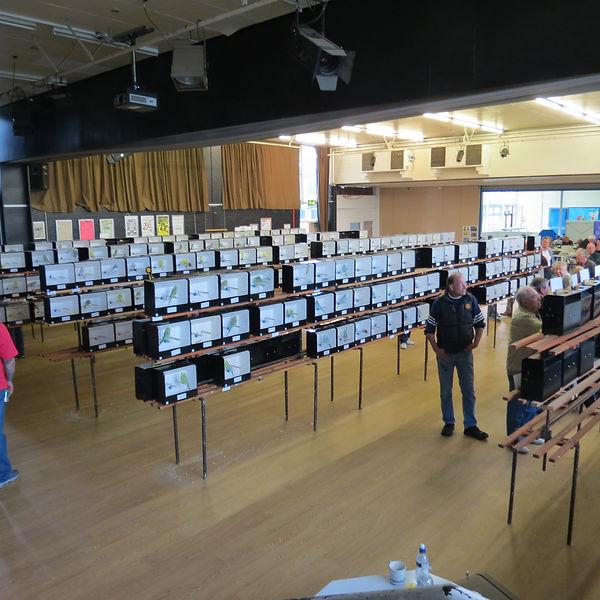 show hall.JPG