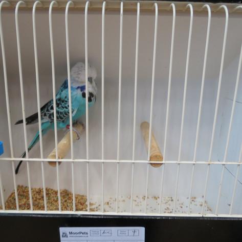 Opaline blue any age - Heptinstall & Wheeler