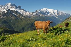 Alpage de Balme