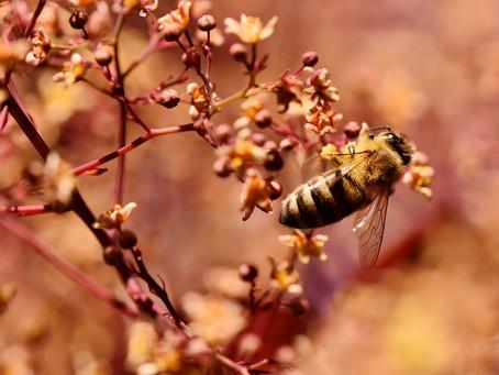 Les abeilles préfèrent le bio !