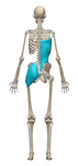 Rotational Core Stability