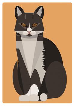נריה חתול