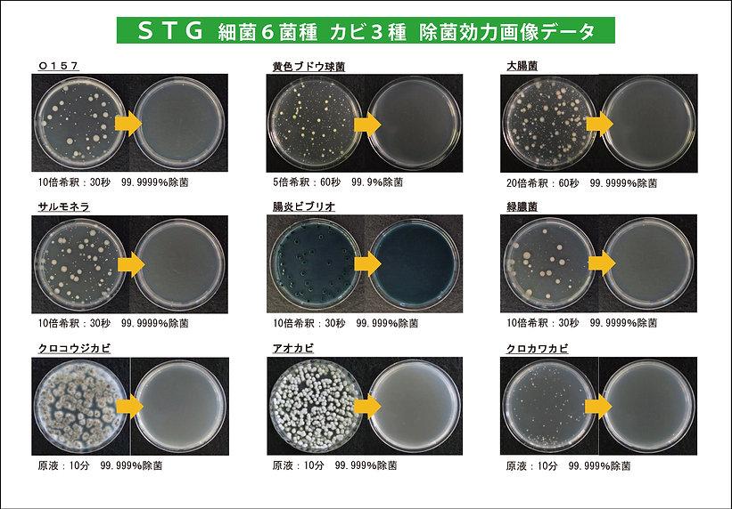 STGevidence-5.jpg