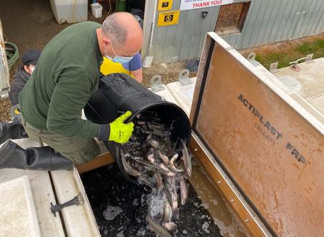 Aquaculture (Fish Farms) & Local Fish Stocking in Alberta