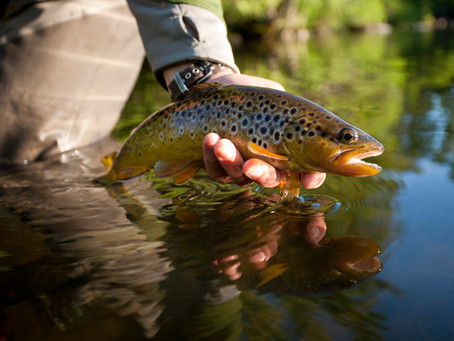 3-Season Feeding for Your Rainbows and Browns